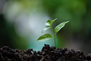 ัyoung green sprout in the soil is growing up. ecology and agriculture concept.