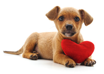 Puppy with heart.