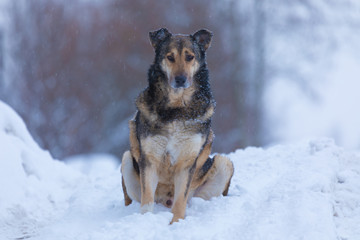 The homeless or lost dog on the city street in the cold winter cloudy day sitting on the snow