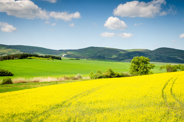 Photo sur Aluminium Jaune rape field background
