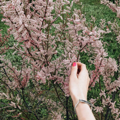 Hand with silver bracelet holding green blooming branch. Pink flowers. Spring concept