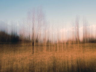 Intentionally blurry autumn, winter countryside landscape. Trees in golden field.