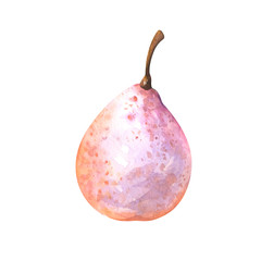 hand painted watercolor illustration of nashi pear isolated on white background