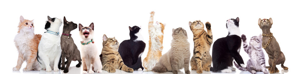 adorable large team of curious cats looking up