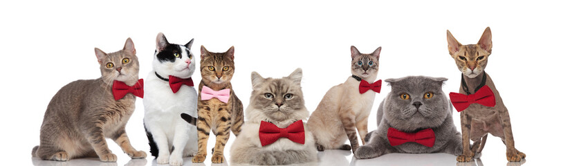 stylish group of cats wearing red and pink bowties