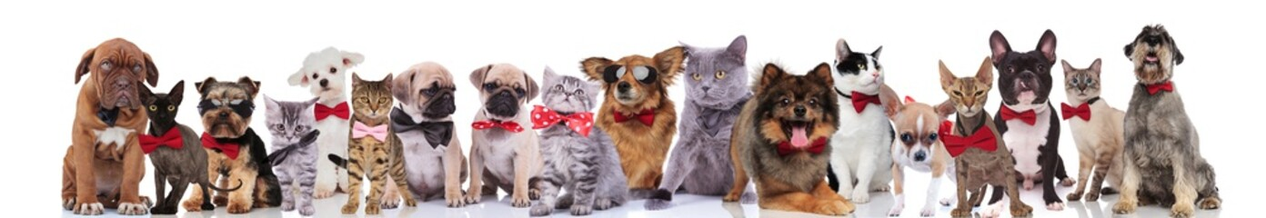 large team of happy elegant pets with red bowties