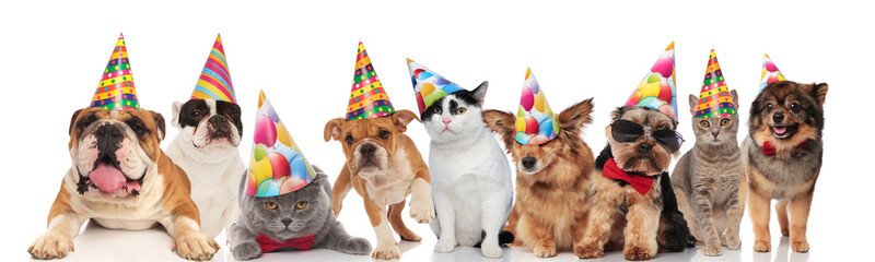 adorable cats and dogs wearing colorful birthday hats looking funny