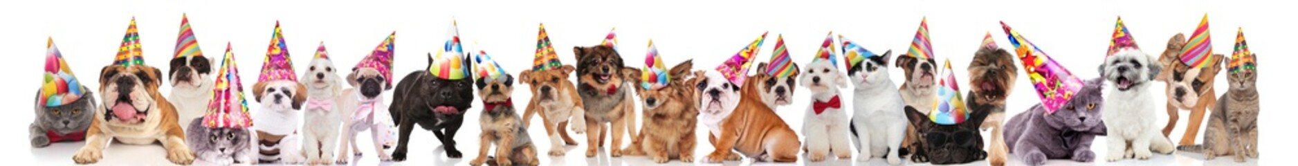 team of many cats and dogs wearing birthday hats