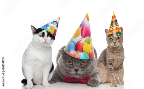 Team Of Three Adorable Birthday Cats With Colorful Hats