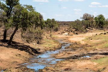 Dry river in Kruger Park, South Africa