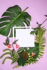 Wall Mural - Composition with blank card and fresh tropical leaves on color background