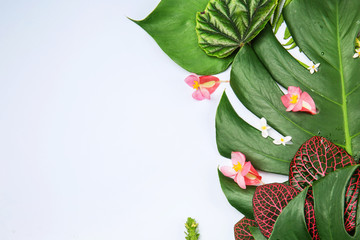 Wall Mural - Composition with fresh tropical leaves and flowers on color background