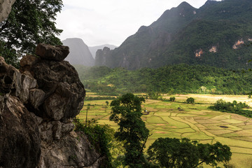 Beautiful greenery rice field from mountain view.