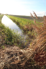 source of river Rotte heading to Rotterdam in Moerkapelle in the sun in the Netherlands