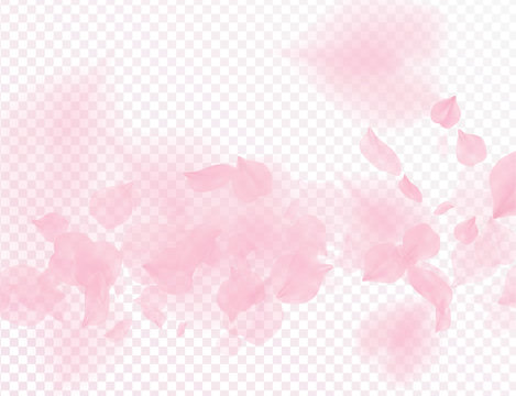 Pink sakura flower falling petals vector transparent background. 3D romantic valentines day illustration. Spring tender light backdrop. Overlay tenderness romance design.