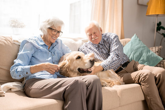 Portrait of happy senior couple with dog sitting on couch enjoying weekend at home in retirement