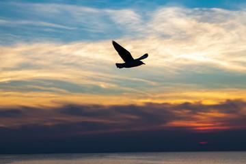 sea birds flying