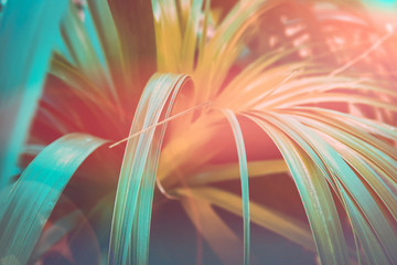 Beautiful tropical nature background. Plant with long narrow dangling leaves. Duotone coral orange and teal gradient effect. Sunlight flare. Travel beach vacation wanderlust tranquility concept