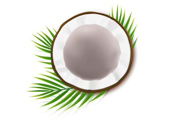 Broken coconut realistic vector, half coco nut with green palm leaves, isolated on white background, top view. Design element for food packaging, ingredient for natural organic cosmetics.