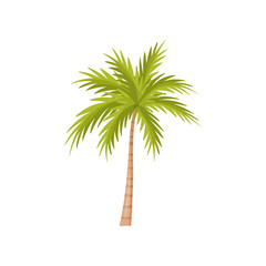 Palm tree with bright green leaves. Natural landscape element. Plant of wild Bali jungle. Flat vector design