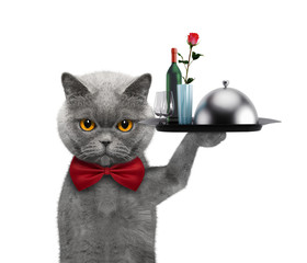 Waiter cat with dishes, wine and rose. Isolated on white