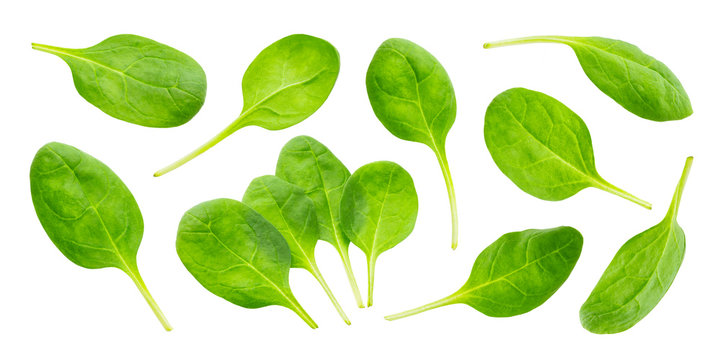 Spinach leaves isolated on white background with clipping path, collection