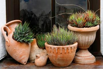 Fototapeta Sukkulenten in Terrakotta Töpfe am Fenster obraz