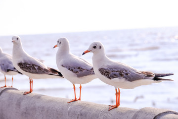 Seagulls standing on the sea shore