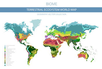 Terrestrial ecosystem world map. Biome. World climatic zone infographic design