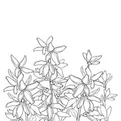 Vector bunch with outline Forsythia flower, branch, leaves in black isolated on white background. Garden plant Forsythia in contour style for spring design and coloring book.
