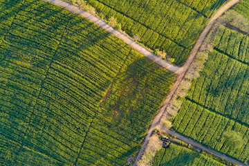 Foto op Plexiglas Luchtfoto Aerial view of beautiful rural road in green corn field. Abstract geometric shapes of agricultural parcels. Lush landscape in countryside. Shot from drone. Nature and agriculture concepts