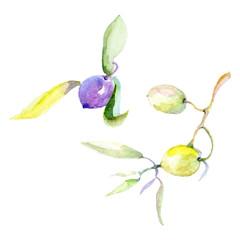 Olive watercolor background illustration set. Green leaf. Leaf plant botanical floral foliage. Isolated olive element.