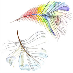 Colorful bird feather from wing isolated. Watercolor background illustration set. Watercolour drawing fashion aquarelle.