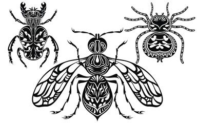 Insect illustration. Tattoo insects. Spider