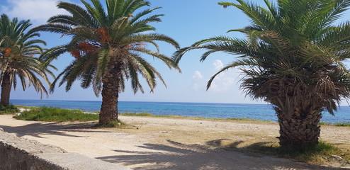 Palmy plaza morze wypoczynek błękit piasek niebo Grecja