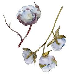 White cotton floral botanical flower. Watercolor background illustration set. Isolated cotton illustration element.