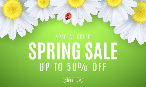 Spring sale banner. Ladybug creeps on the flowers. Realistic daisies. Seasonal design for your business. Water drops. Special offer. Gift card. Vector illustration