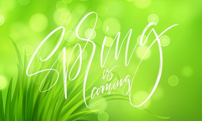 Frash Spring green grass background with handwriting lettering. Vector illustration