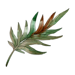 Green palm beach tree leaves. Watercolor background illustration set. Isolated leaf illustration element.