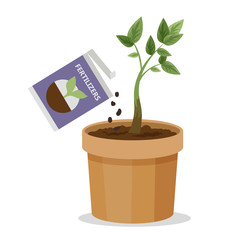 Growing plant in the pot using plant fertilizer