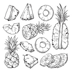 Pineapple sketch illustration, fresh sliced tropical fruit