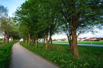 image of a bikeway and walkway with trees and grean meadow
