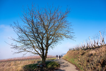 Wanderung am Kaiserstuhl
