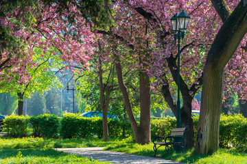 bench under the lantern in a park among cherry blossom. beautiful urban scenery. wonderful springtime weather. green grass