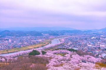 Cherry Blossom in Funaoka Castle Ruin Park, Miyagi prefecture, Japan