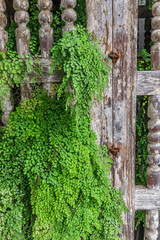 Foto op Canvas Zuid-Amerika land Young grass on the old gate