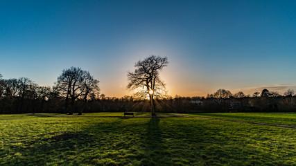 Schöne Stimmung, Sonne, Baum, im Park