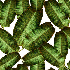 Tropical banana leaves, jungle leaf seamless floral pattern white background. Artistic palms pattern with seamless repeating design. Pattern for summer designs.