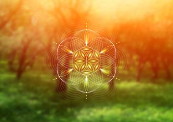 Vector template; Spiritual sacred geometry; Abstract geometric shape based on ancient symbol -