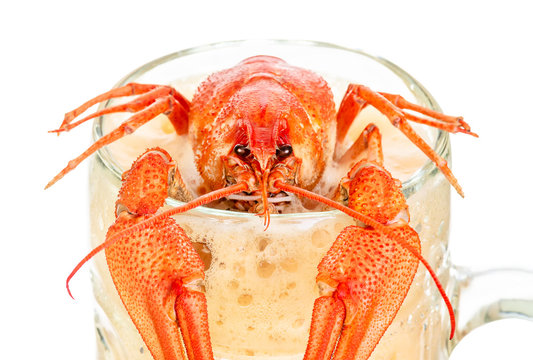 crawfish with beer isolated on white background
